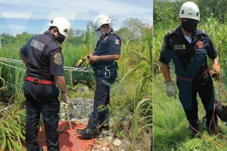 Rescatan a un perro que cayó a un pozo de ocho metros de profundidad