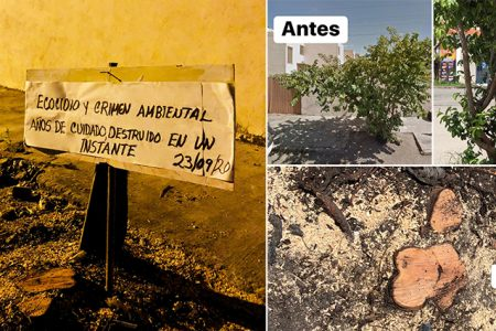 Denuncian tala ilegal de un árbol
