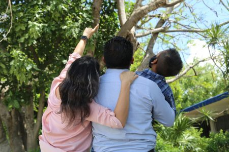 Yucatán logra cifra histórica en adopciones