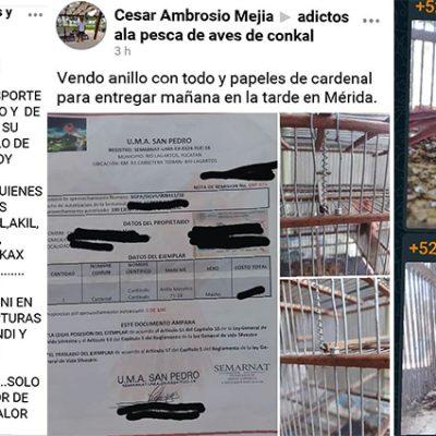 Impune falsificación de documentos para vender aves en Yucatán