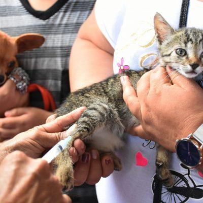 En marcha campaña de vacunación antirrábica para perros y gatos