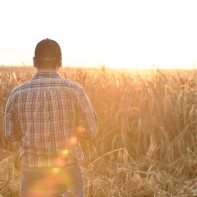 Científicos mexicanos crean maíz resistente al cambio climático