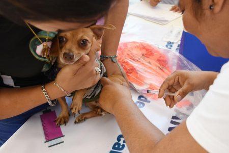 Del 20 al 26 de septiembre vacunarán contra la rabia a 332 mil perros y gatos en Yucatán
