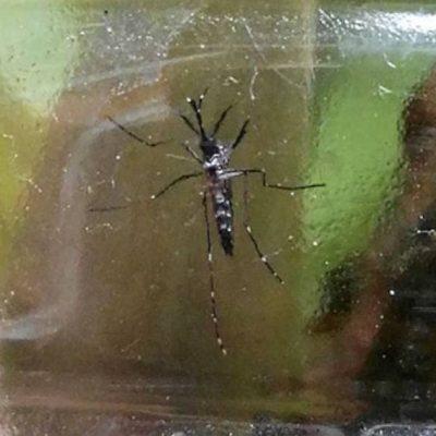Reaparece el dengue en Yucatán, un caso luego de tres semanas de ausencia