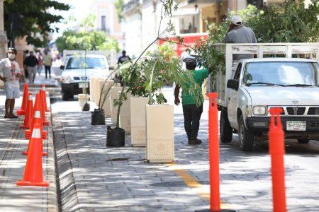 'Brotan' árboles en calles del Centro Histórico de Mérida