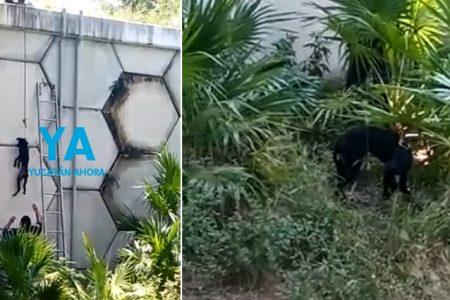 Rescatan a un perro travieso que subió un puente y no pudo bajar