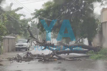La lluvia derriba un Flamboyán, cables y dos postes en Villa Magna