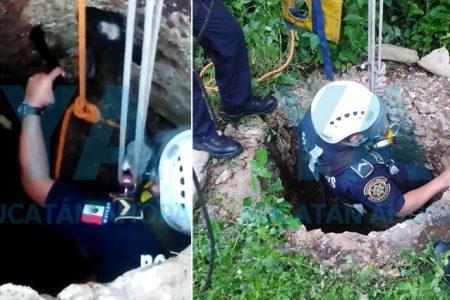 Rescatan un borrego que cayó a un pozo