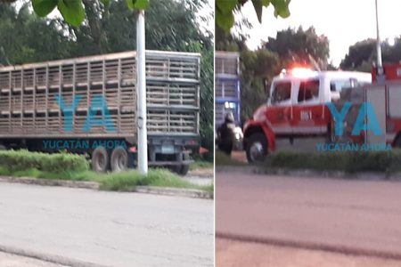 Caos vial por un camión de cerdos que hizo mala maniobra