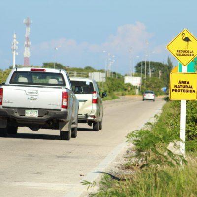 Colocan señalamientos para proteger a los flamencos en carreteras de la costa