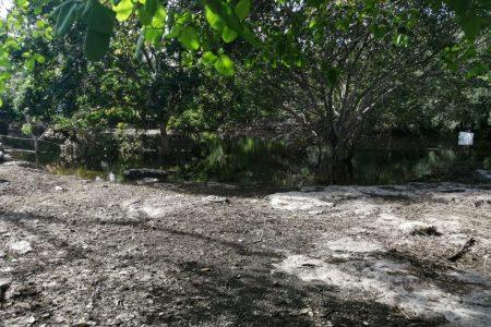 Gamma y Delta desbordaron el Cenote Xlacah, en Dzibilchaltún