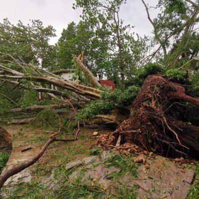 Tormenta tropical Gamma derribó 870 árboles a su paso por el oriente de Yucatán
