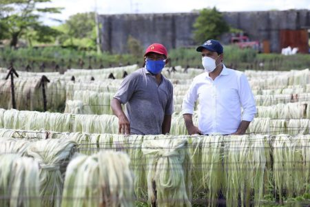 Respaldo a productores yucatecos para que superen daños de huracanes