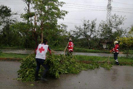 Hasta voluntarios de la Cruz Roja le entraron al retiro de árboles en caminos