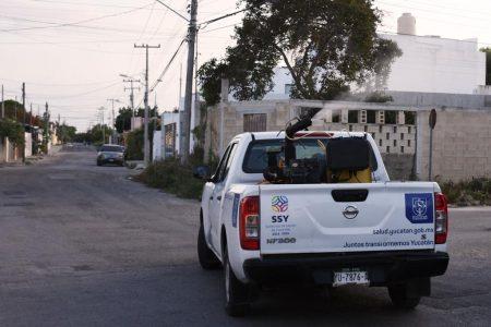 Yucatán, sin casos de dengue en las última dos semanas