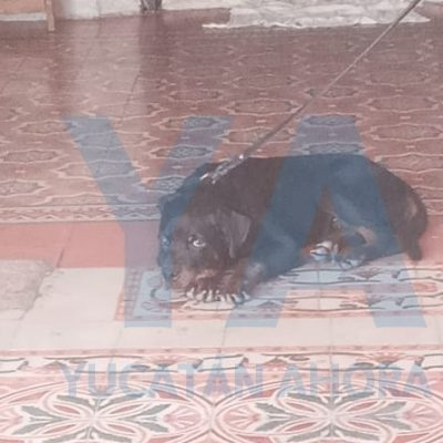 Rottweiler muerde en un brazo a un abuelito de 80 años
