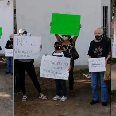 Disparan contra la casa de una activista pro derechos de los animales