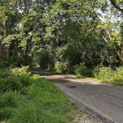 Ingiere desparasitante de ganado en un rancho del sur de Yucatán