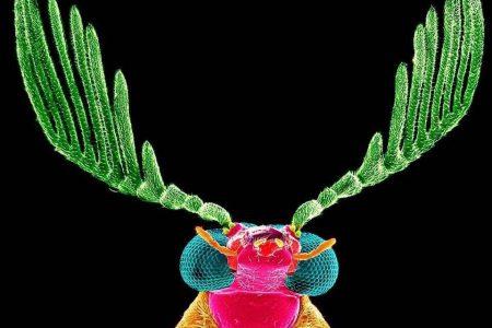 Con innovadora técnica muestran la belleza de la flora y la fauna de Yucatán