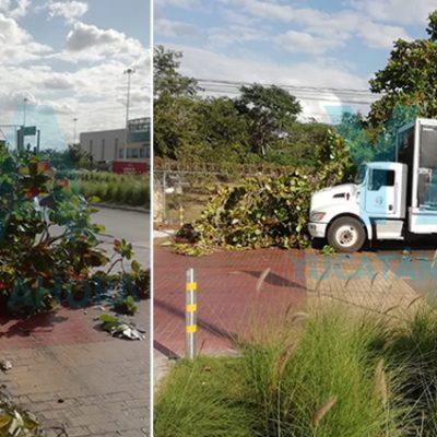 Camión cervecero choca y derriba un árbol