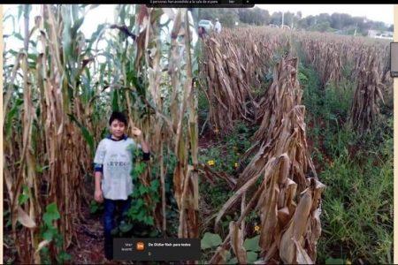 Niños de Mérida conocen 'Los colores del maíz'