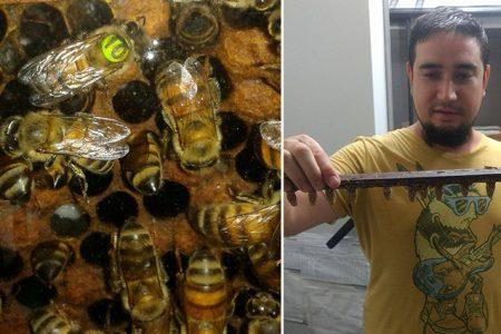 Egresado de la UADY gana premio nacional por tesis sobre efecto del calor en abejas