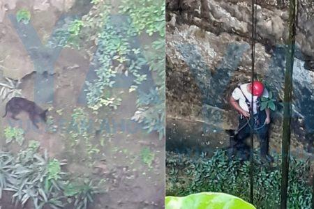 Rescatan a peludo canino que cayó a profundo cenote
