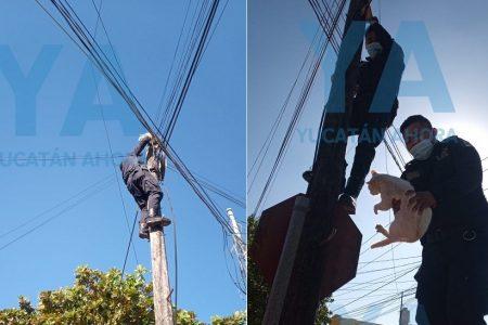 Gato volador: se subió a lo alto de un poste y tuvieron que bajarlo policías