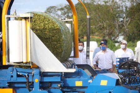 Pese al Covid-19 y ciclones, productores yucatecos inician la cosecha