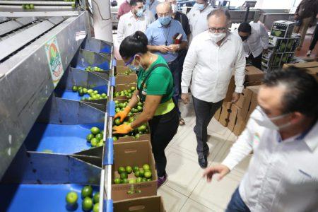 Inversión privada impulsa el desarrollo económico en zonas rezagadas de Yucatán