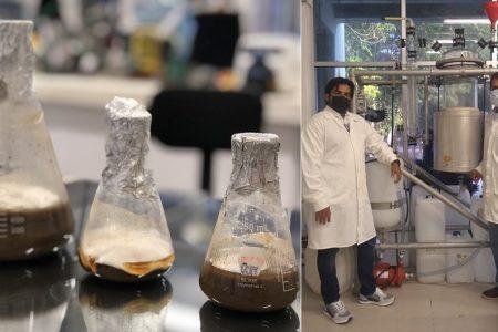 Patentan en Yucatán proceso de producción de bioetanol con semillas de ramón