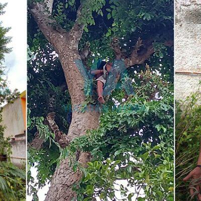 Se embriagó y despertó en un árbol a siete metros de altura, sin saber cómo