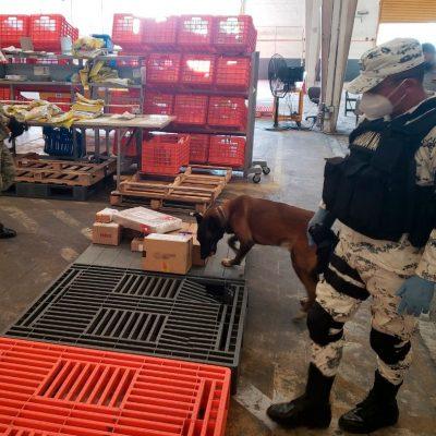 Envían a Mérida 40 paquetes de marihuana ocultos en diversos artículos