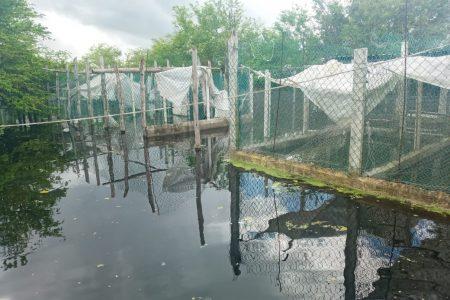 Le llovió sobre mojado a granja de cocodrilos… y aún siguen inundados