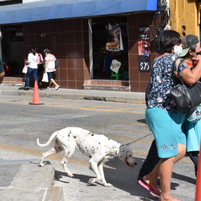 Enero, el cuarto mes con más contagios y defunciones por Covid-19 en Yucatán