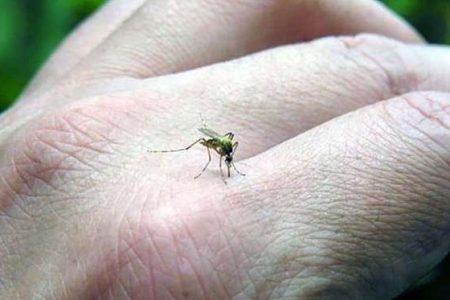 El 2020, año del repliegue del dengue en Yucatán