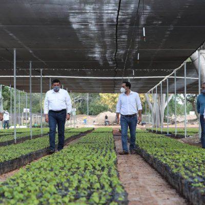Mauricio Vila supervisa producción de plantas para 'Sembrando Vida'
