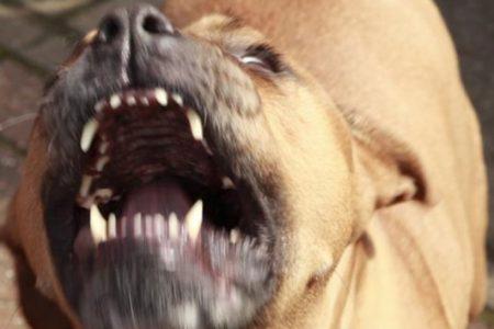 Mérida: se registran dos ataques de perros contra sus dueños