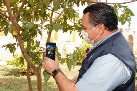 ÁrbolMID, la aplicación del Ayuntamiento de Mérida para cuidar las plantas
