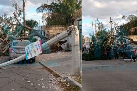 Cae árbol, derriba un poste y deja sin luz a vecinos de Pedregales de Lindavista