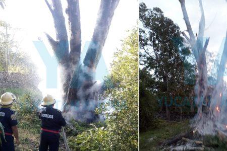 Arde en llamas un árbol viejo de Laurel