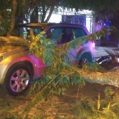 Camión de basura derriba un árbol y cae sobre una camioneta