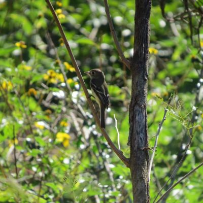 Reserva Ecológica 'Cuxtal', generadora de servicios ambientales indispensables para la biodiversidad