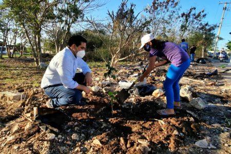 Rehabilitan área verde en fraccionamiento de Vergel