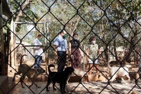 Más de 500 perros de refugios se benefician con el Reto Peek de Ramírez Marín