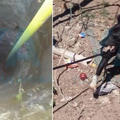 Rescatan un perro que cayó a pozo con agua