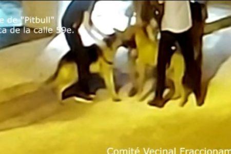 Pitbull sin correa ataca a una mascota en Las Américas