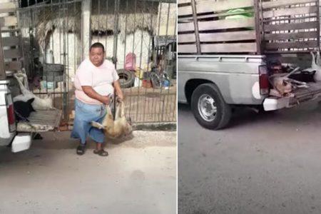 Denuncian envenenamiento masivo de perros en Tekax