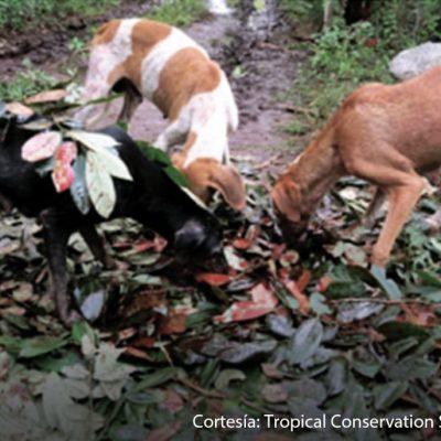 El perro, mucho más que una mascota en las comunidades mayas