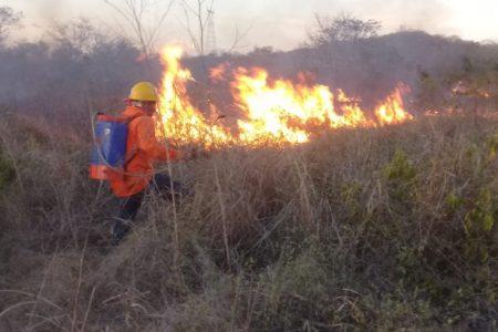Procivy hace llamado a los yucatecos para contribuir a la prevención y control de incendios